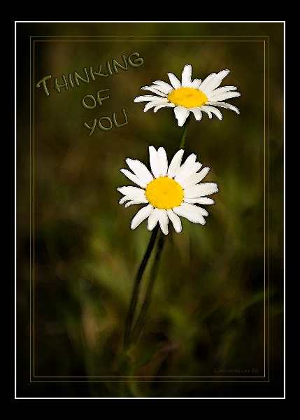 tom_8267-thinking-of-you-copy-1